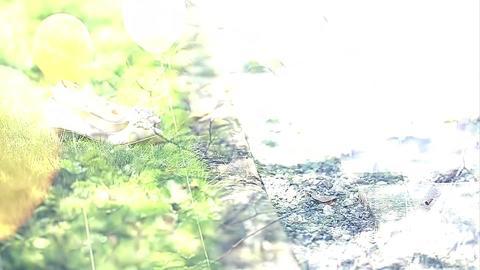 豚豚影像 单摄影单摄像4680